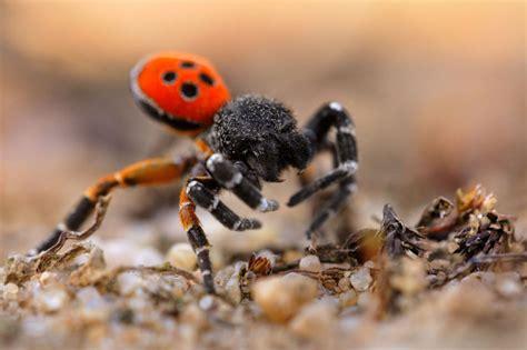 große spinnen im haus was tun naturfoto des monats september nabu