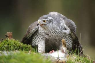 birds  prey dorset wildlife trust