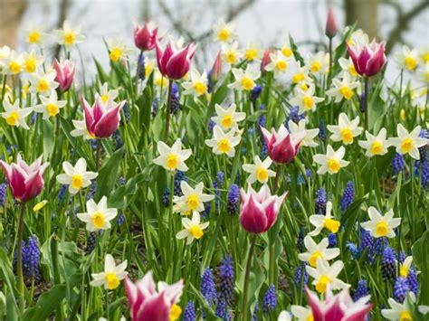plant a bed of bulbs hgtv