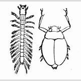 Aquatic Worm Drawing | 295 x 283 png 13kB