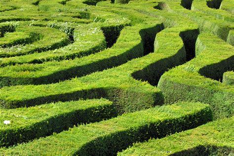 longleat hedge maze flickr photo sharing
