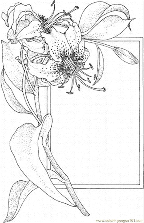lily coloring pages    print