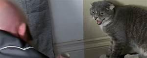 Il mio gatto è indemoniato: quando fuffy è aggressivo Tvzap