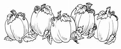 Pumpkin Patch Coloring Vine Clipart Pages Printable