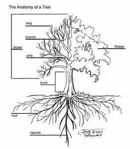 Bald Cyprus Tree Clipart 20 Free Cliparts