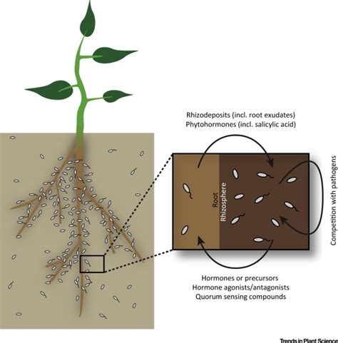 beneficial microbes affect endogenous mechanisms