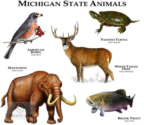State Animals Of Michigan Line Art And Full Color. Auto Insurance Without Drivers License. Homeowners Insurance Rates By State. It Compliance Management Chicago Film Schools. Simplexity Product Development. Aarp Dental Plans Medicare Pre K In Maryland. The Best Business Bank For Small Business. Diagnosis Of Psoriasis Future No Matter What. Certificate In Accounting And Finance