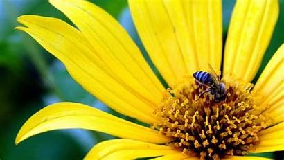 Yellow 1080p Wallpapers Widescreen Definition