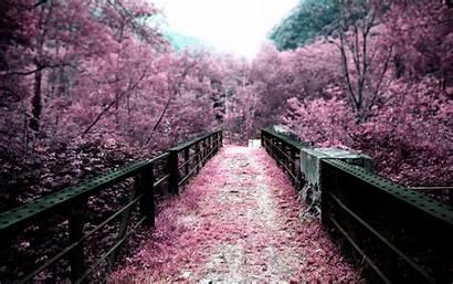 Sakura Wallpapers 2560 1600