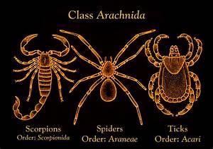 Flashcards - Phylum Arthropoda Bio 218