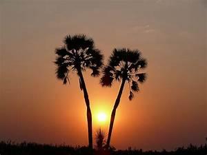 Die Schönsten Gewächshäuser : foto die sch nsten palmen der welt namibia palmwag ~ Michelbontemps.com Haus und Dekorationen