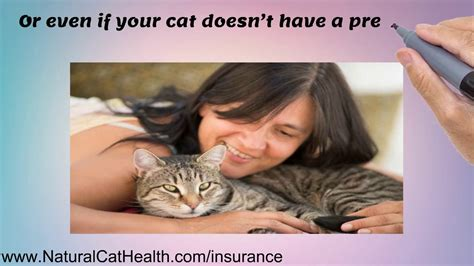 For instance, if your dog has a liver infection and then you purchase pet insurance, treatment for the liver infection will not be covered. Pet Insurance For Cats With Pre Existing Conditions - YouTube