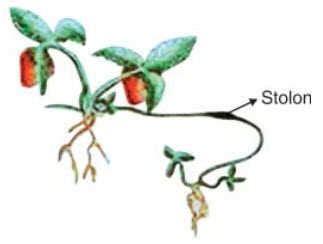 perkembangbiakan tumbuhan ciptacendekiacom