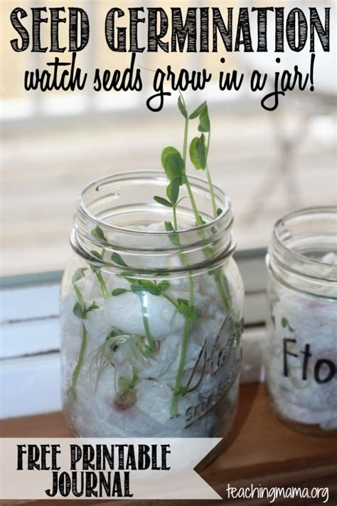 seed germination activity  printable
