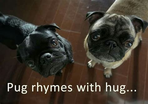 Images About Pug Hugs Wi Pug Rescue On Pinterest