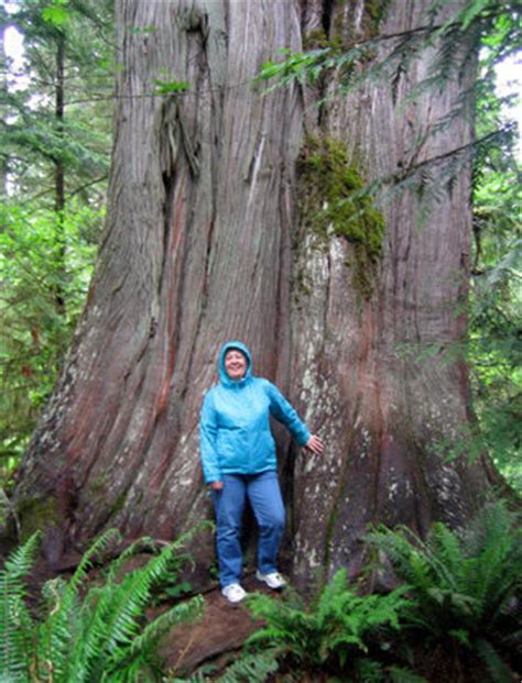 cathedral grove british columbia linking  biospheres