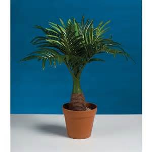 buy mini palm tree centerpiece