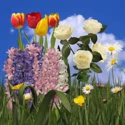 Summer Flower Scenes