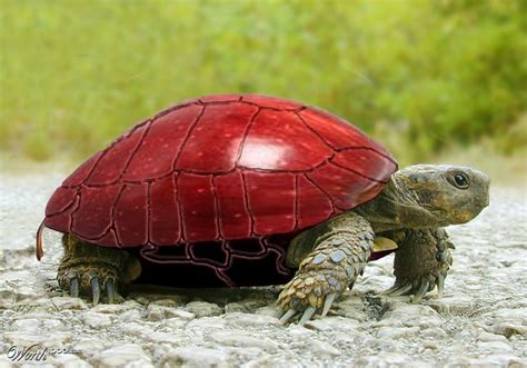 apple turtle worth1000 contests turtle turtle land turtles tortoise