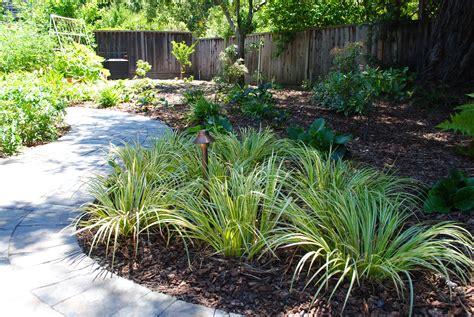 garden shade ideas home and design lawn for no sun