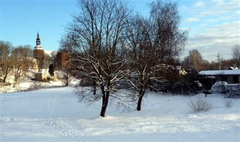 Koku ciršanai un apzāģēšanai Valmierā jāsaņem pašvaldības atļauja - Valmieras Ziņas