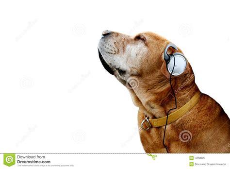 dog stock image image  chair flight friend
