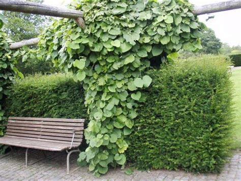 20 Green Fence Designs, Plants To Beautify Garden Design