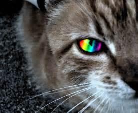 magic cat magic cat by 18 on deviantart