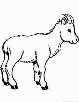 Goat Coloring Pages Animal Zoom sketch template