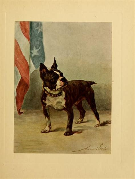 boston terrier  power   dog vintage dog cat
