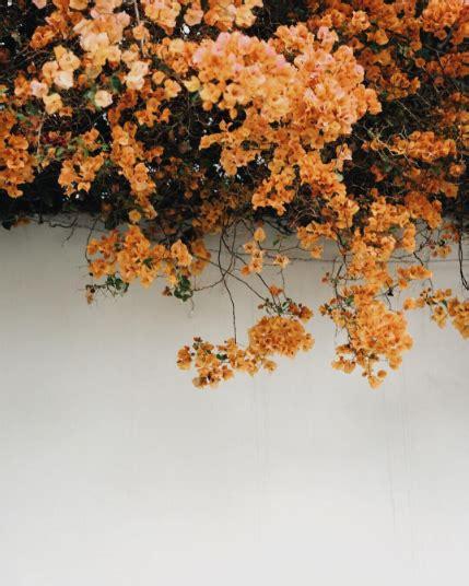 orange bougainvillea instagram photography ideas