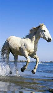White Horse Running In Water Wallpaper - Free iPhone ...
