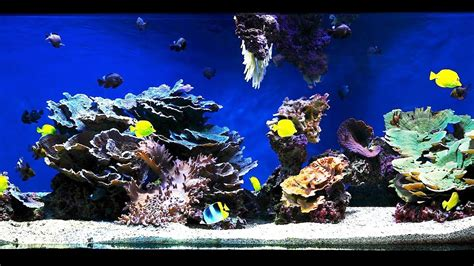 Saltwater Aquarium Aquascape by How To Aquascape A Saltwater Aquarium Aquarium Care