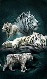 25 Best White Tiger Photographic | Fotos de animales ...