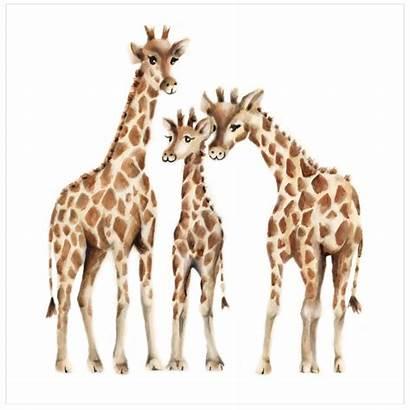 Giraffe Nursery Animal Painting Prints Drawings Studioqart