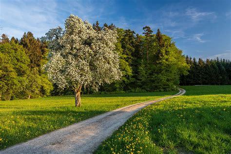 schöne bilder kaufen fr 252 hling sch 246 ne landschaft bilder kaufen stimmungs