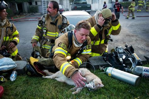 Firefighter Giving Oxygen To A Rescued Cat.
