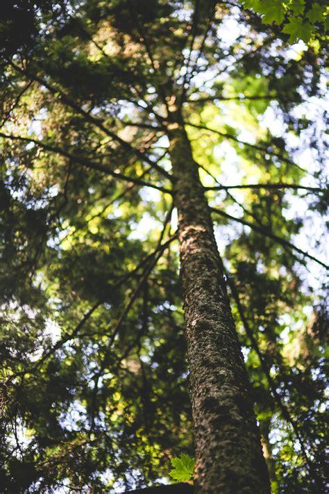 stock photo  bark flaking forest