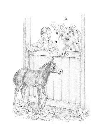 geheimnisvolles fohlen sternenschweif bd von linda