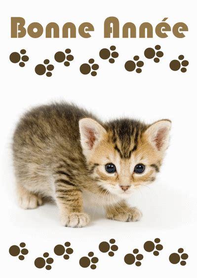 carte bonne annee  chaton espiegle envoyer une carte