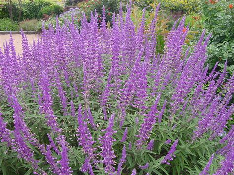 xeriscape bushes plantanswers plant answers gt 12 months of watersaver landscape color october