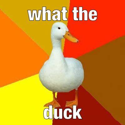 Mallard Duck Meme - duck meme on tumblr