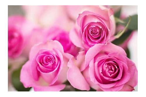 baixar papel de parede rosa floral com fundo