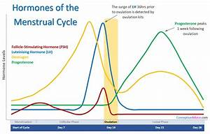 Menstrual Cycle Calendar and Phases | Conception Advice