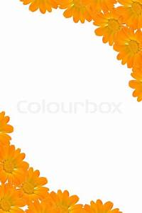 Floral background frame from orange flowers and white ...