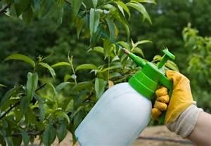Blattläuse Gurken Bekämpfen : blattl use bek mpfen und pflanzen sch tzen mit obi ~ Lizthompson.info Haus und Dekorationen