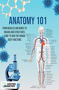 Anatomy 101  From Muscles And Bones To Organs And