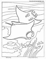 Coloring Ocean Fish Sea Manta Ray Printable Stingray Animal Cuttlefish Seashore Colouring Animals Dolphin Sheets Corvette Colouringpages Adult Rays Drawing sketch template