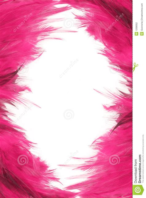 feather borders stock photo image  feathers frame