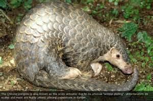 Animal Endangered Species List